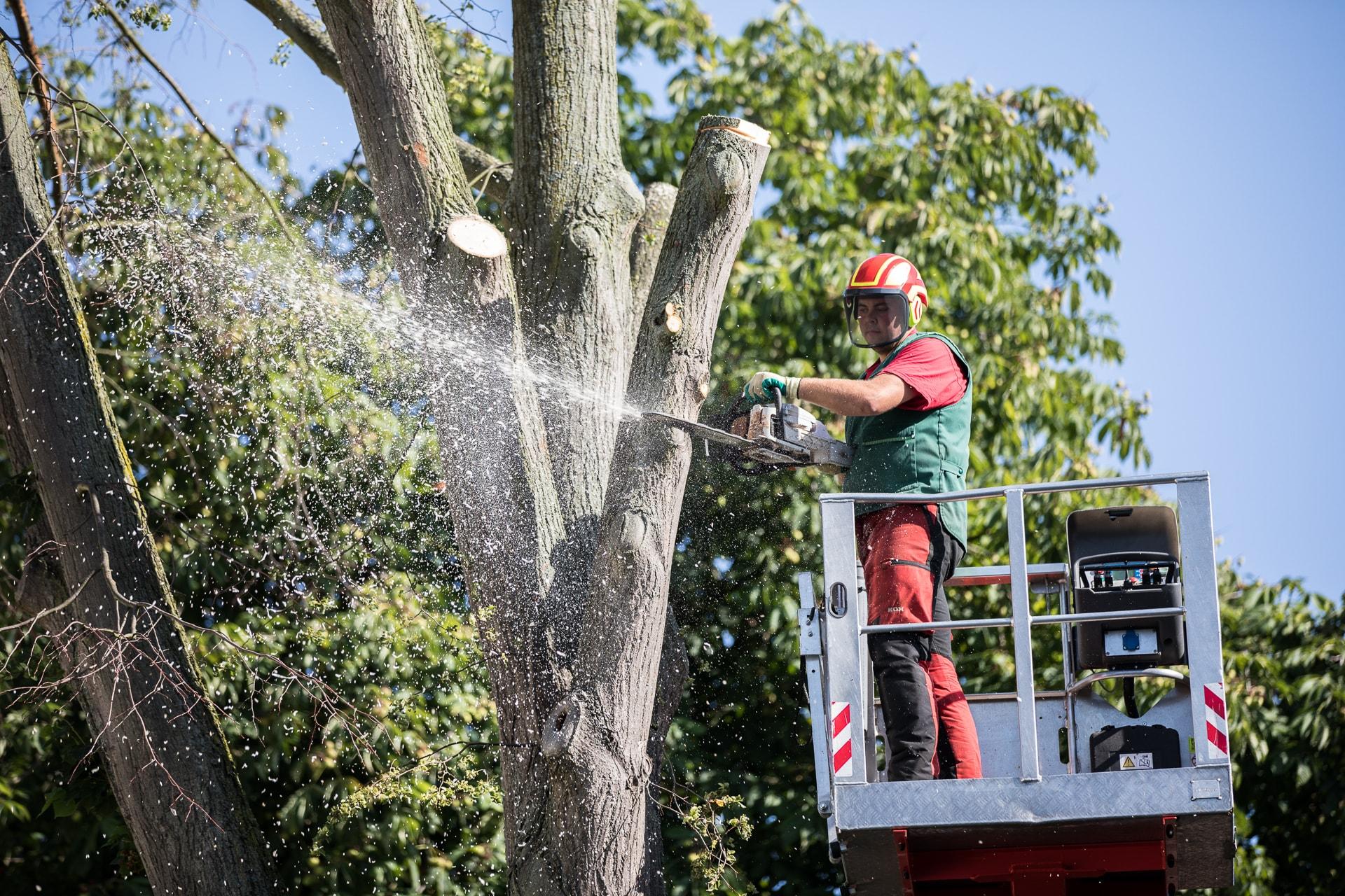 Mennigmann Garten- und Landschaftsbau GmbH Baumpflege